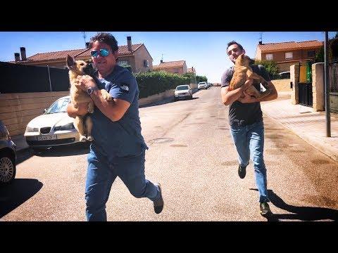Twee honden werden mishandeld en zijn gered!