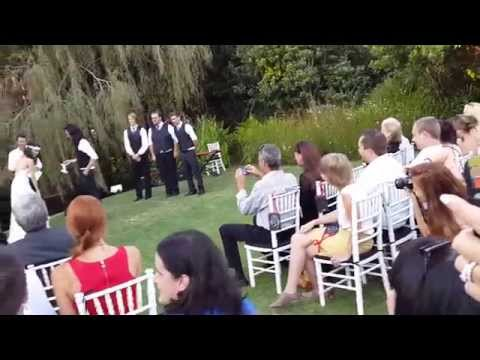 Clever dog brings the Bride and Groom their rings at wedding