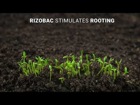 RIZOBAC_english version