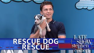 Video Rescue Dog Rescue With Tom Holland: Superhero Edition MP3, 3GP, MP4, WEBM, AVI, FLV Juni 2019