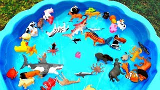 Lots of Zoo Wild Animals Learn Colors For Children With Real Safari Videos