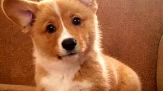 Video Where have I been?? - Sorry - P For Puppy download in MP3, 3GP, MP4, WEBM, AVI, FLV Februari 2017