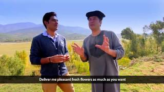 Video Pashto New HD Song Ka Lare Bajawar Ta 2015 By Bakhtiar Khattak download in MP3, 3GP, MP4, WEBM, AVI, FLV January 2017