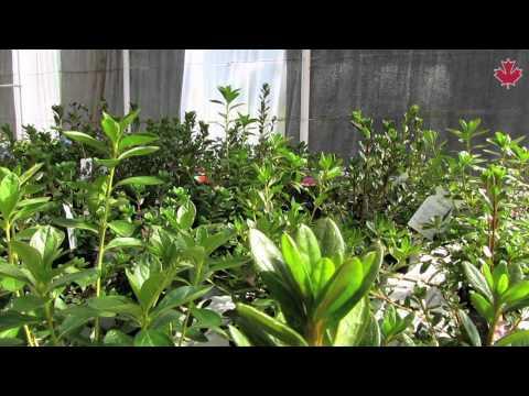 Viveros el rosal videos videos relacionados con for Viveros el rosal