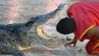 Samut Prakan Thailand  city pictures gallery : Crocodile Bites Trainer's Head at a Crocodile Farm in Samut Prakan, Thailand