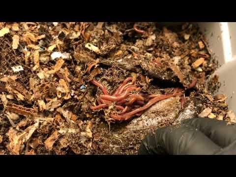Experimental Worm Bins: Week 14 Update