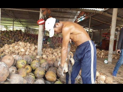Thánh lột dừa đã lộ diện, bóc vỏ trái dừa đơn giản như bóc trái quýt - Thời lượng: 13 phút.