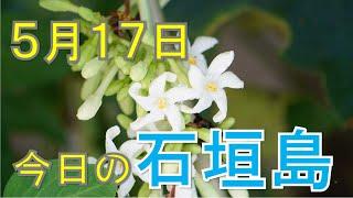 5月17日の石垣島天気