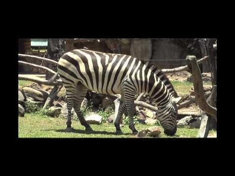 Visitan el Zoológico