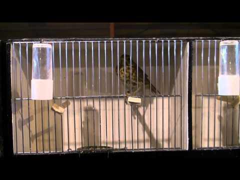 bourse d'oiseaux hannut 05-02-2012