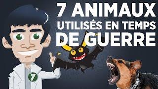 Video 7 animaux utilisés en temps de guerre MP3, 3GP, MP4, WEBM, AVI, FLV Agustus 2017