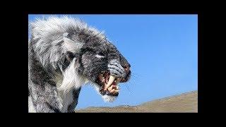 Video 絶滅してよかったと思う、怖い動物18選 MP3, 3GP, MP4, WEBM, AVI, FLV Mei 2018
