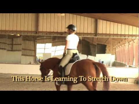 How To Engage Your Horse's Back