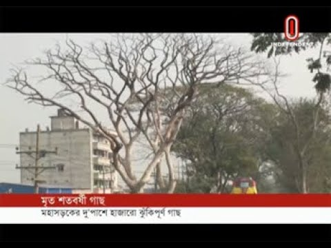Hundred-year old tree dies (18-01-2018) Courtesy: Independent TV