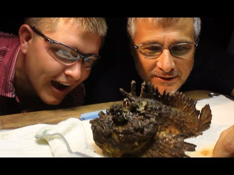 Milking the WORLD'S MOST VENOMOUS FISH! – Smarter Every Day 117