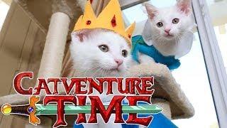 Adventure Time (Cute Kitten Edition)