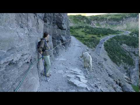 17 07 29 Glacier Ntnl Prk, Highline Trail 400 (видео)