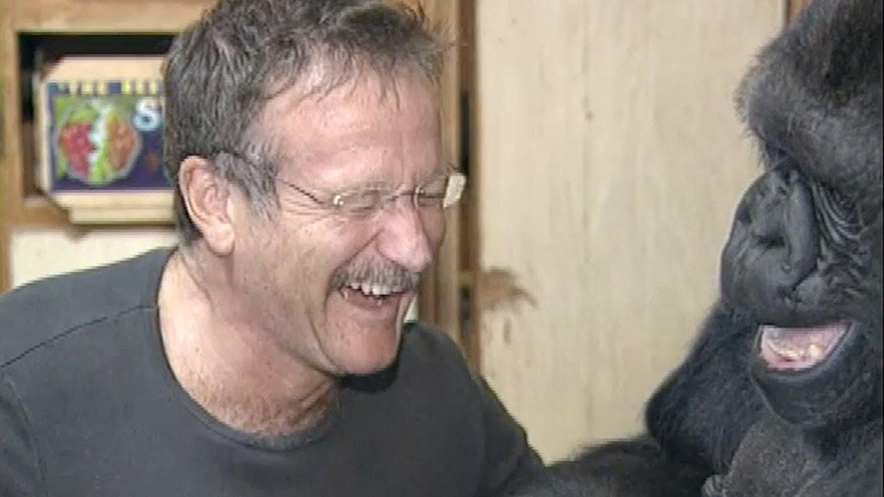 Robin Williams and Koko the Gorilla