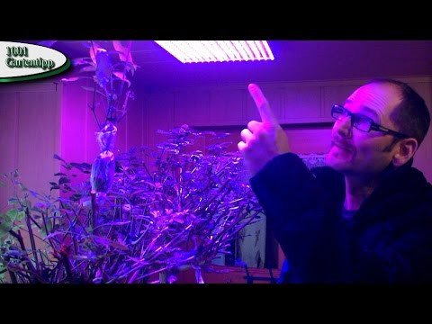 Gartentipp Februar 0212 LED Grow Lampen für Jungpflanzen und Kübelpflanzen