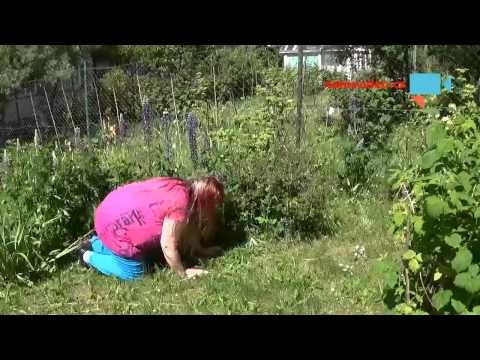 Na zahradě  jsem  spadla na  hubu .