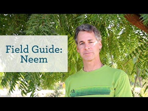 Neem - An Ayurvedic Herb for Health Skin and Blood