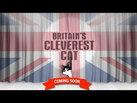 Felix and BGT Britain's Cleverest Cat 2014 – Coming Soon Promo