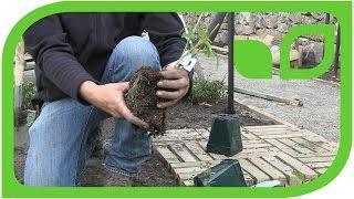 Ippenburger Gartentipps: Wie werden Himbeeren richtig gepflanzt?