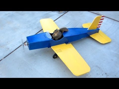 airplane - HobbyWars - Unbelievable video of Squirrel stealing model airplane with manual controls.