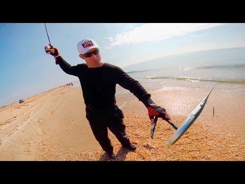 ловля саргана на спиннинг с берега