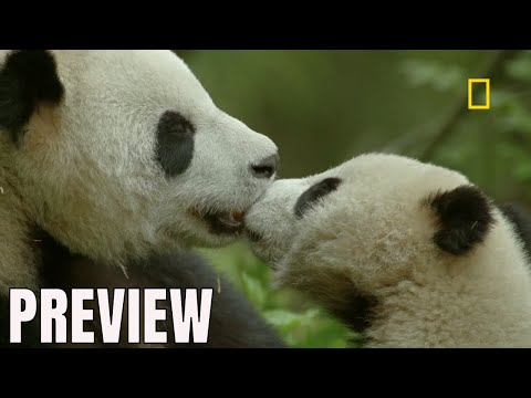 National Geographic China's Hidden Kingdoms Preview