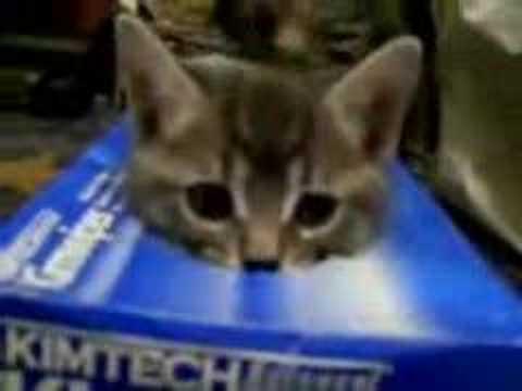 3 kittens, 1 tissue