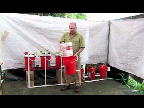 DIY Home Five Gallon Aquaponic System