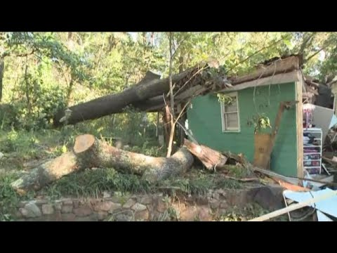 Trees came falling down as a result of Hurricane Michael