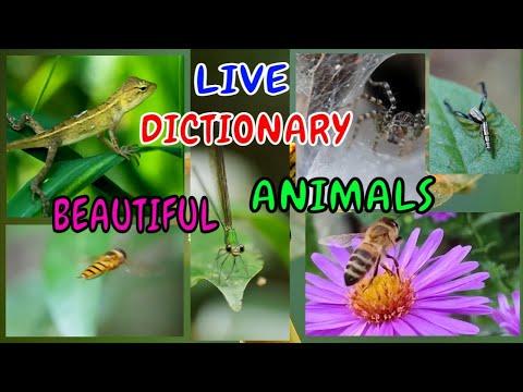 Động Vật - Live Dictionary