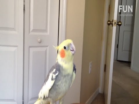 birds - The funniest birds singing dubstep and dancing to dubstep. Videos in this compilation: 1. The Dancing Bird Rocking 2. Dubstep Parrot 3. Dancing & Beatboxing ...