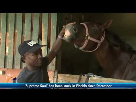 Triple Crown winner Supreme Soul return to Jamaica now imminent | SportsMax Zone