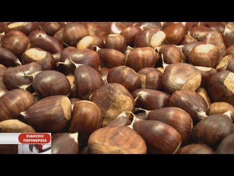 Υποσχόμενη απασχόληση η καλλιέργεια κάστανου | 15/10/2019 | ΕΡΤ