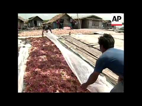 Many fleeing armed conflict are  turning to seaweed farming