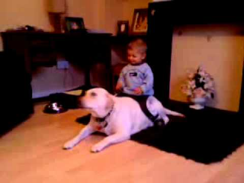 Labradors are amazing dogs (My dog with my nephew)