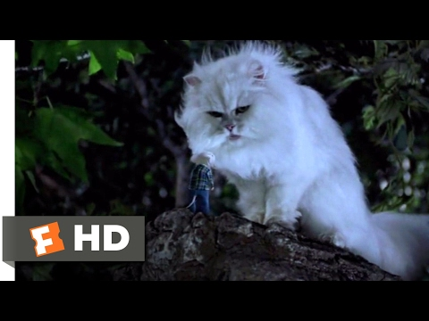Stuart Little (1999) - You Saved Me? Scene (9/10) | Movieclips