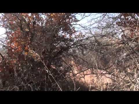 Squaw Mountain-Les Pickett Oryx Hunt.MTS (видео)