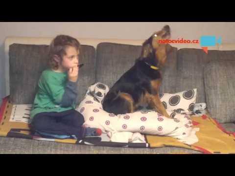 Harmonikář a zpívající pes