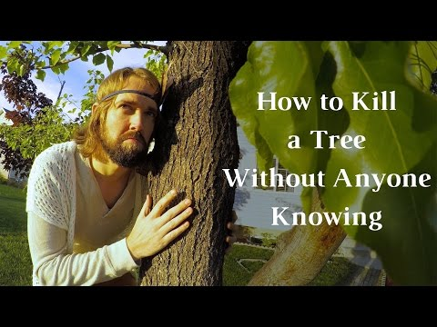 How To Kill A Tree Without Anyone Knowing - How To Kill A Tree - Journey To Sustainability