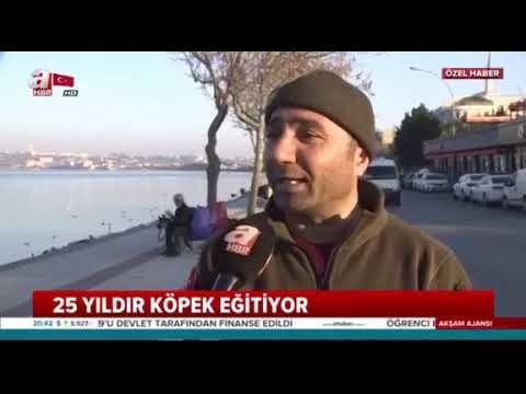 Köpek Eğitmeni Mahmut Çelik 0536 785 07 43 İstanbul Avcılar