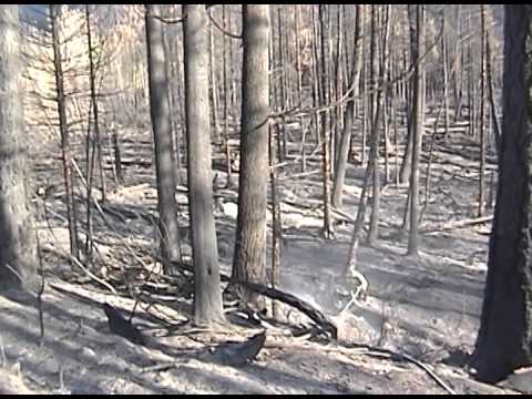 Glacier National Park Fires - 2001