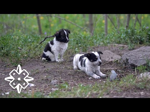 The Puppies of Chernobyl