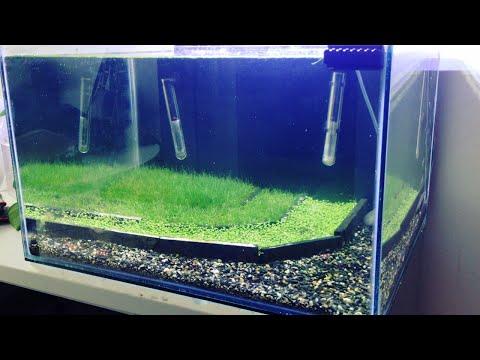 HOW TO: Making a Crystal Red Shrimp Planted Breeding Aquarium | TonyTanks (видео)