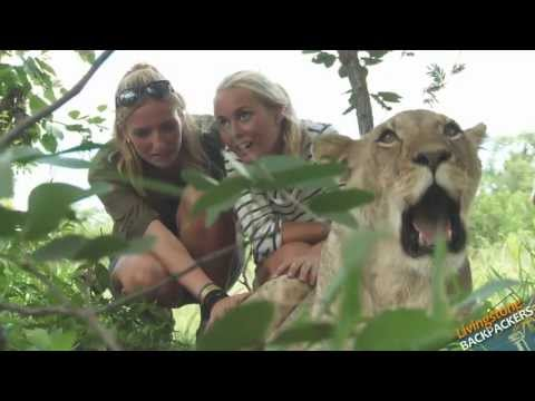 Livingstone Backpackers Videosu