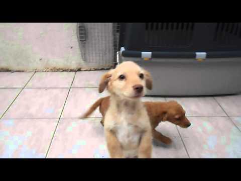 Wanja, ein Hund in Not aus dem Tierschutz
