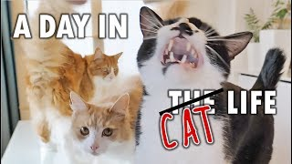 Video A day in the life of our cats MP3, 3GP, MP4, WEBM, AVI, FLV Juli 2019